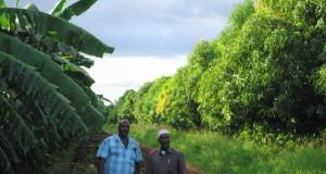 الإنتاج الزراعي في الصومال.. الفرص، العقبات، المتطلبات