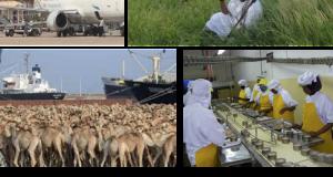 الطريق الي النهضة… التحولات الكبرى التي شهدتها الصومال خلال ( ٢٠١٢-٢٠١٥)